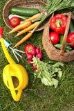 Organic vegetables in the garden Stock Photo