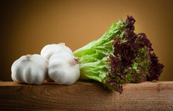 Organic vegetables. Garlic and salad lettuce Royalty Free Stock Image