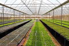 Organic vegetables greenhouses in Thailand Royalty Free Stock Image