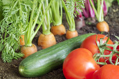 Organic vegetables growing in the garden Stock Images