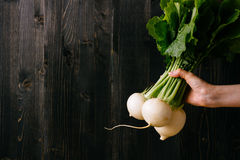 Organic vegetables. Hands holding fresh turnip. Black wooden background with copy space Stock Images