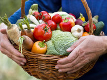 Organic vegetables in hands Stock Photography