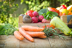 Organic vegetables - healthy eating Royalty Free Stock Image