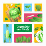 Organic Vegetables Herbs Colorful Headers Poster Stock Images
