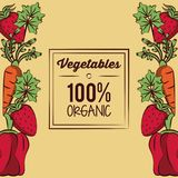 Fresh Organic vegetables. Organic vegetables icon vector illustration graphic design Royalty Free Stock Image