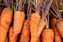 Organic vegetables. Locally Grown Organic Carrots in a Basket at the Farmers Market royalty free stock image