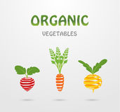 Organic vegetables royalty free illustration