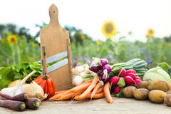Organic vegetables on a table Stock Photos