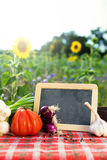 Organic vegetables on a table Stock Photography