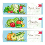 Organic vegetables vegetarian banners set Royalty Free Stock Photo