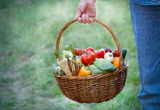 Organic vegetables in a wicker basket. Basket full of fresh organic vegetables Royalty Free Stock Images