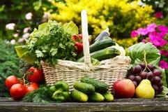 Organic vegetables in wicker basket in the garden. Fresh organic vegetables in wicker basket in the garden Stock Photos