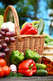 Organic vegetables in wicker basket in the garden Royalty Free Stock Images