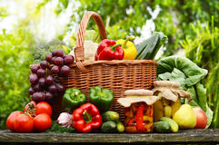 Organic vegetables in wicker basket in the garden Royalty Free Stock Image