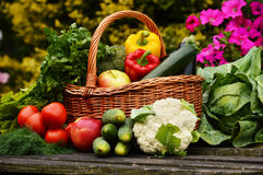 Organic vegetables in wicker basket in the garden Royalty Free Stock Photo