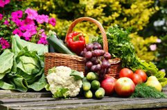 Organic vegetables in wicker basket in the garden Stock Image