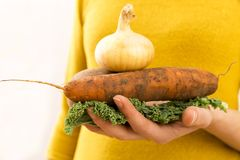 Organic vegetables. Woman`s hands with freshly harvested vegetab Royalty Free Stock Photos