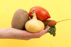 Organic vegetables. Woman`s hands with freshly harvested vegetab Royalty Free Stock Photo
