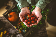Organic vegetables on wood. Farmer holding harvested vegetables. Rustic setting Stock Photography