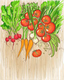 Organic vegetables on a wooden background Royalty Free Stock Photo
