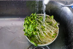 Organic veggie Stock Photography