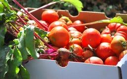 Organic veggies. Stock Photos