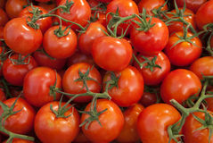 Organic Vine Tomatoes Royalty Free Stock Images