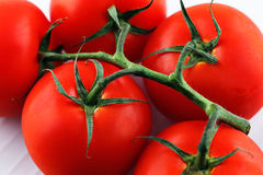 Organic vine tomatoes Royalty Free Stock Photos