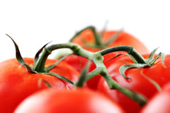 Organic vine tomatoes Stock Photography