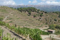 Organic vineyard in Priorat (aka Priorato), Spain. Organic vineyard in Priorat (aka Priorato) with vines and a restored stone masia (aka mas) or traditional stock images