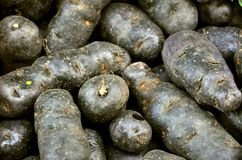 Organic violet potatoes on sale Royalty Free Stock Image