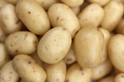 Organic vivaldi new potatoes Stock Image