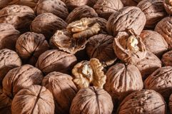 Organic walnuts. A Group of freshly picked walnuts on a table Royalty Free Stock Photo