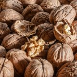 Organic walnuts. A Group of freshly picked walnuts on a table Royalty Free Stock Photography