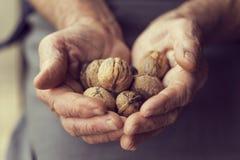 Organic Walnuts Offer Stock Photography