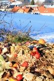 Organic waste Stock Image