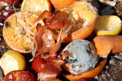 Organic waste Stock Photography
