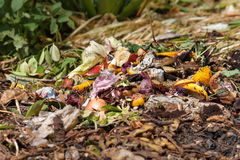 Organic waste. Bio-waste with pieces of eggs, onions and others fruits in decomposition Royalty Free Stock Images