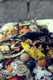 Organic waste Stock Image