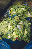 Organic waste from the fresh market.  Stock Photography