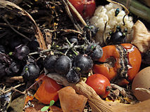 Organic waste Stock Photos