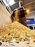 Organic waste plant Royalty Free Stock Photos