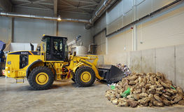 Organic waste plant Royalty Free Stock Image