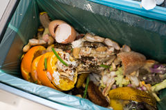 Organic waste sorting Stock Photography