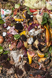 Organic waste taken from above Stock Photo