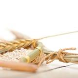 Organic wheat grains Royalty Free Stock Photo