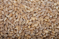 Organic wheat grains. Over rustic wood table macro closeup Royalty Free Stock Photography