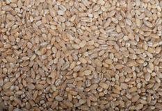 Organic wheat grains Royalty Free Stock Photos