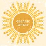 Organic wheat Stock Photography