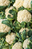 Organic white cauliflower on sale in the grocery stall. In summer royalty free stock photography